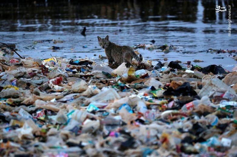 آلودگی ضایعات پلاستیک