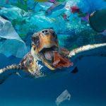 ورود ضایعات پلاستیک به اقیانوس ها باعث مرگ و میر میلیون ها آبزیان می شود