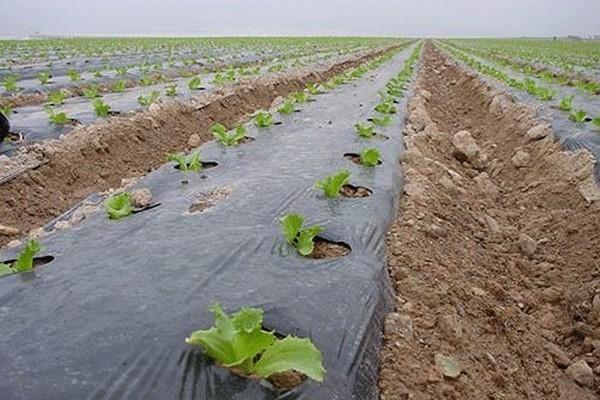 مشکلات بازیافت ضایعات پلاستیک و نایلون بکاررفته در کشاورزی