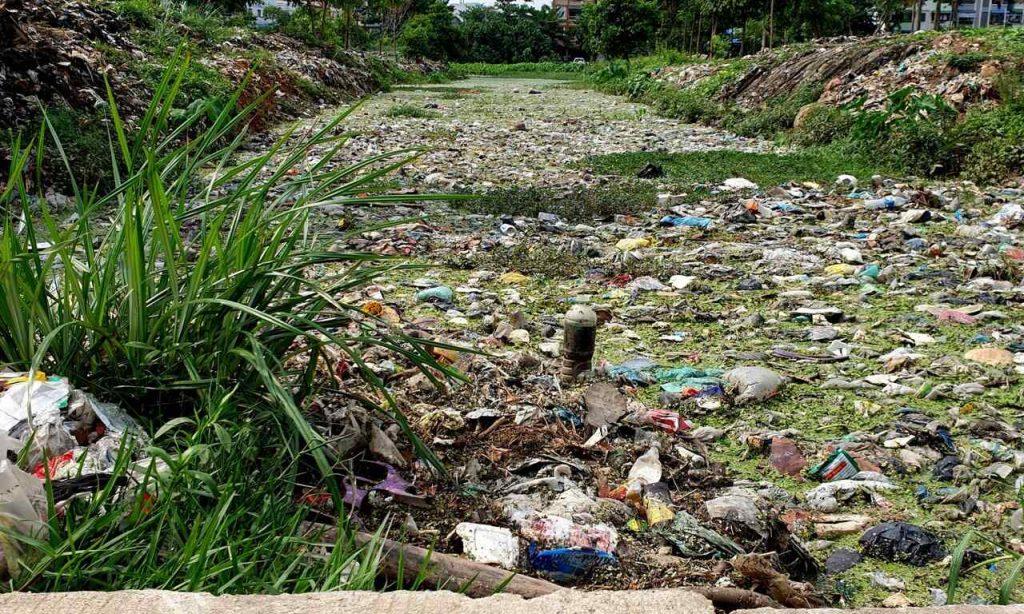 نوعی سوسک به حل بحران ضایعات پلاستیک کمک میکند
