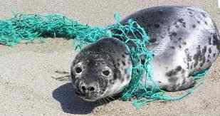 افزایش ۳ برابری ضایعات پلاستیک در اقیانوس ها فقط تا ۲۰ سال آینده | ۶۰۰ میلیون تن پلاستیک با دریاها چه میکند؟